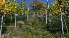 Harvest time: 3 wines produced in Andorra that will surprise you